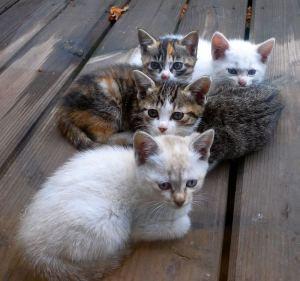 しんちゃん一家 子ネコは最後は1匹だけになってしまった
